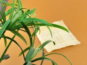 Papyrus herstellung und Papyrusgeschichte
