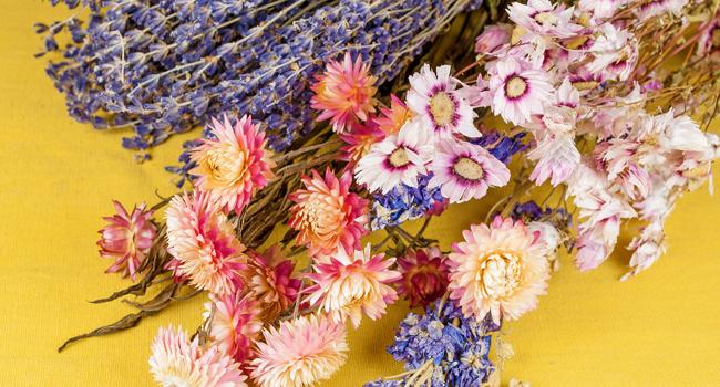 Blumen-Pflanzen