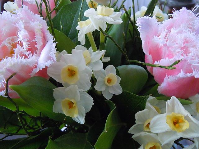 Blumenstrauß_mit_Tulpen_und_Narzissen_2